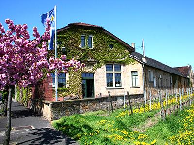 Wijncoöperatie Deidesheim in de Pfalz